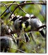 Gossip Birds Canvas Print