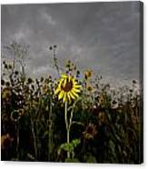 Goth Sunflower Canvas Print