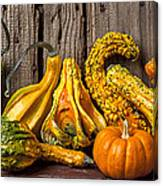 Gourds Against Wooden Wall Canvas Print