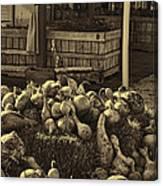 Gourds In Sepia Splendor Canvas Print