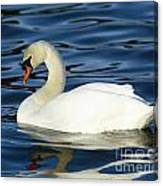 Graceful Reflections - Mute Swan Canvas Print