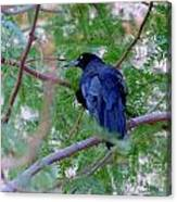 Grackle On A Branch Canvas Print