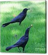 Grackles In The Yard Canvas Print