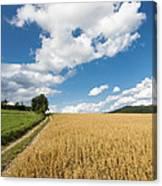 Grainfield Blue Sky Canvas Print
