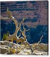 Grand Canyon Dead Tree Canvas Print
