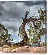 Grand Canyon Facing The Storm Canvas Print