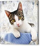 Grand Kitty Cuteness 2 Canvas Print
