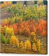 Grand Teton Fall Color Canvas Print