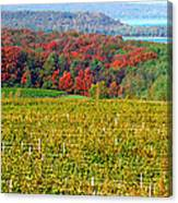 Grand Traverse Winery In Autumn Canvas Print