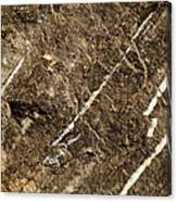 Granite Marbling India Canvas Print