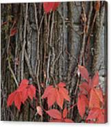 Grape Leaves On Column Canvas Print