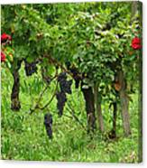 Grape Vines And Roses I Canvas Print