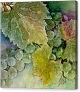 Grapes II Canvas Print