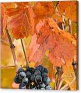 Grapes On The Vine - Vertical Canvas Print