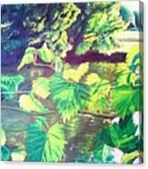 Grapevines Toledo Botanical Gardens Canvas Print