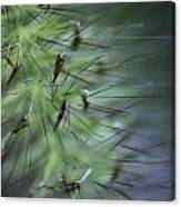 Grass Abstraction Canvas Print