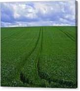 Grass Field Canvas Print