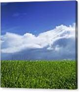 Grass In A Field, Ireland Canvas Print