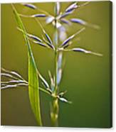 Grass In Flower Canvas Print