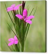 Grass Pink Bouquet Canvas Print