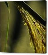 Grass Plume Canvas Print