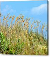 Grass Waving In The Breeze Canvas Print