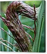 Grass Worm Canvas Print