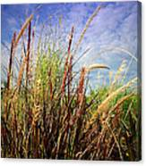 Grasses Standing Tall Canvas Print