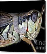 Grasshopper With Parasitic Mite Canvas Print