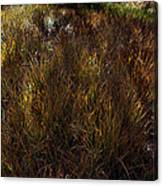 Grassland In Late Afternoon Canvas Print