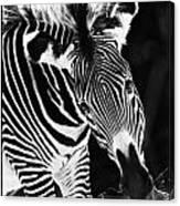 Gravy Zebra Canvas Print