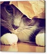 Gray Cat In Bag Canvas Print