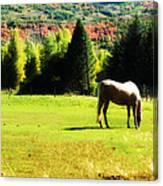 Grazing Autumn Canvas Print
