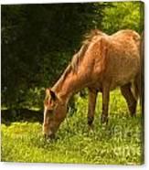 Grazing Horse Canvas Print