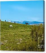 Grazing Horses Canvas Print