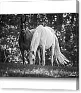 Grazing In Black And White Canvas Print