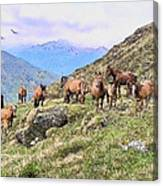 Grazing In The Foothills Canvas Print