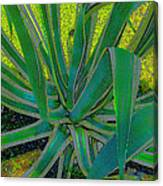 Great Agave Canvas Print
