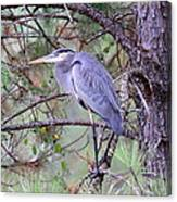 Great Blue Heron - Happy Place Canvas Print