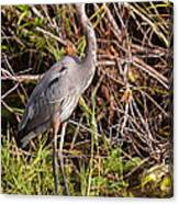 Great Blue Heron And Turtle Canvas Print