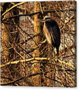 Great Blue Heron At Dusk Canvas Print