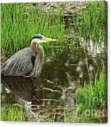 Great Blue Heron At The Marsh Canvas Print