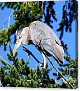 Great Blue Heron Concentration Canvas Print