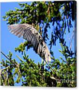 Great Blue Heron Cover Up Canvas Print