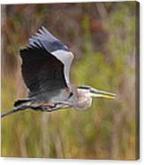 Great Blue Heron In Flight II Canvas Print