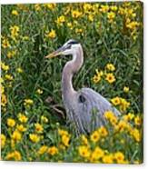 Great Blue Heron In The Flowers Canvas Print