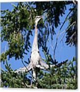 Great Blue Heron Meditation Pacific Northwest Canvas Print