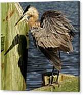 Great Blue Heron On The Block Canvas Print