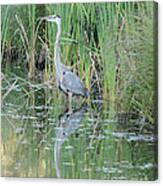 Great Blue Heron With Reflection Canvas Print
