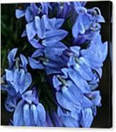 Great Blue Lobella Canvas Print